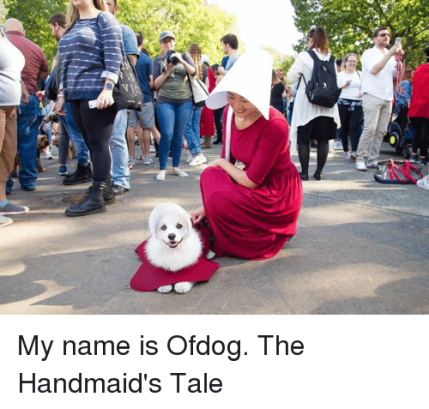 my-name-is-ofdog-the-handmaids-tale-28487389